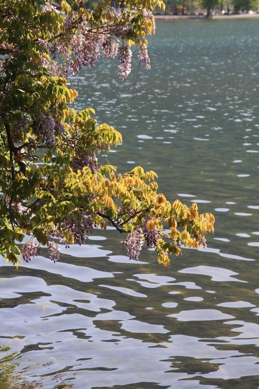 premières feuilles et fleurs