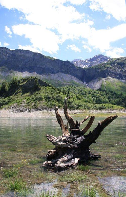 souche au lac